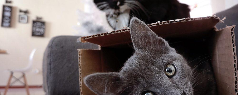 Comment préparer son animal à un déménagement ?