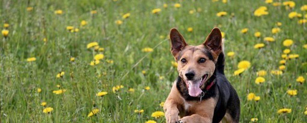 Idées de jeux et d'activités en plein-air pour les chiens.