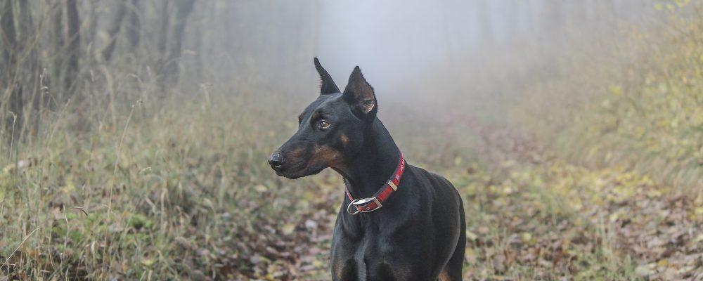 Que faire si l'on croise un chien perdu ?